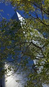 disney thru the trees